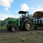Organic pumpkin farm